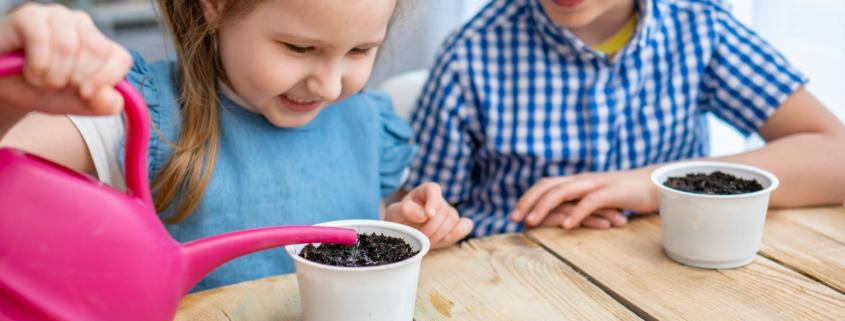 brotes comestibles o semillas germinadas